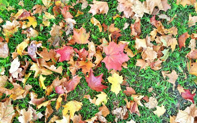 Helsinki_autumnleaves